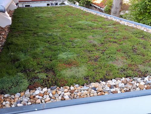 groen dak in Wassenaar